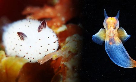 10 Hewan Laut yang Misterius, Lucu Tapi Berbahaya! 27