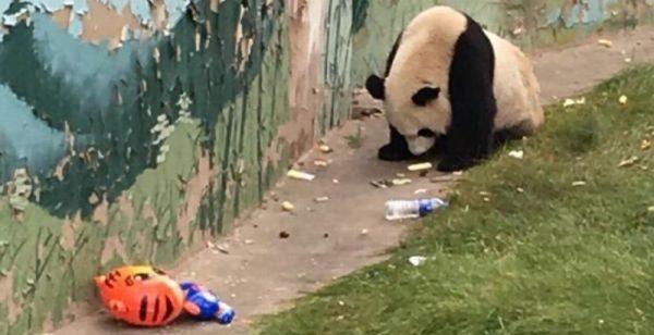 panda-makan-sampah