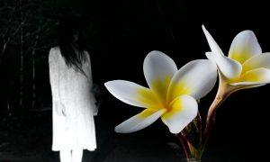 Bunga Ini Mengundang Makhluk Halus
