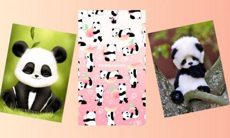 50+ Wallpaper Panda Lucu Paling Menggemaskan 8