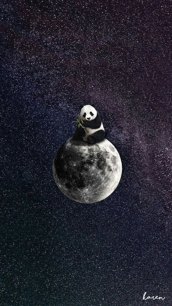 Panda In The Space