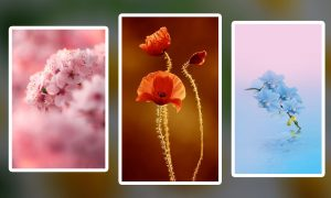 Wallpaper Bunga HD Paling Cantik