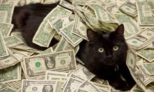 Kucing Paling Mahal di Dunia